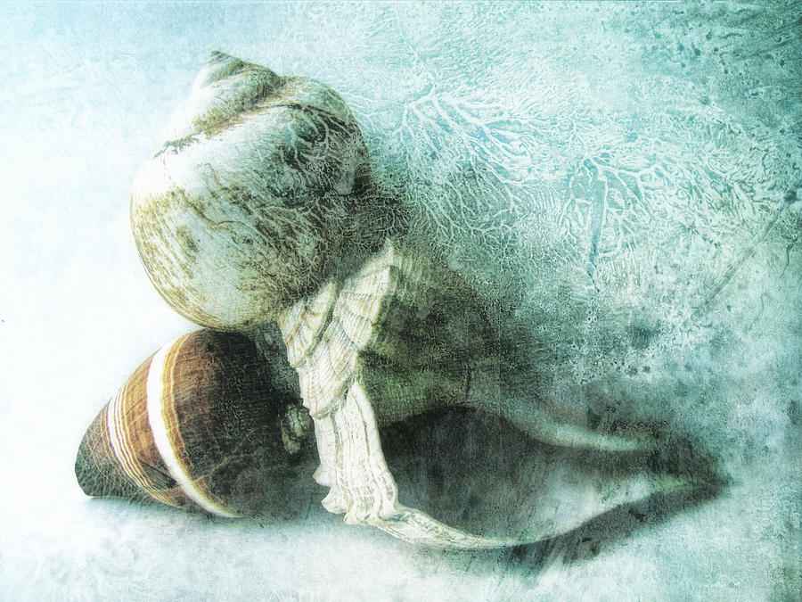 Sea Shells Photograph - Sea Shells IIi Teal Blue by Ann Powell