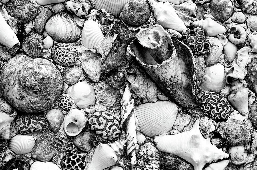 Nassau Photograph - Sea Shells - Nassau, Bahamas by Timothy Wildey