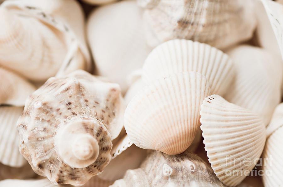 Bright Photograph - Sea Snails And Molluscs Empty Shells Sepia Toned  by Arletta Cwalina