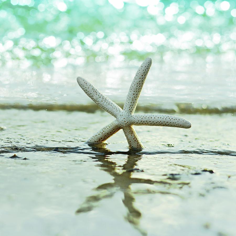 Beach Photograph - Sea Star by Laura Fasulo