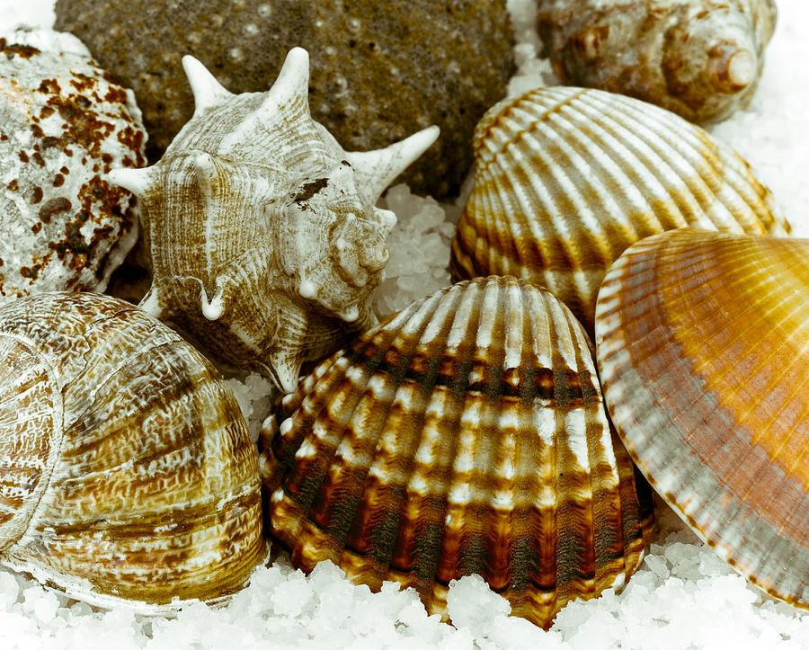Sea Photograph - Sea Treasures by Frank Tschakert