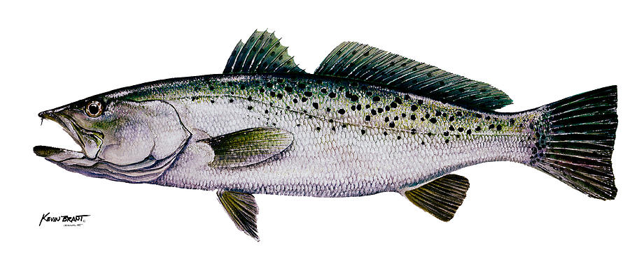 Sea Trout Painting - Sea Trout by Kevin Brant