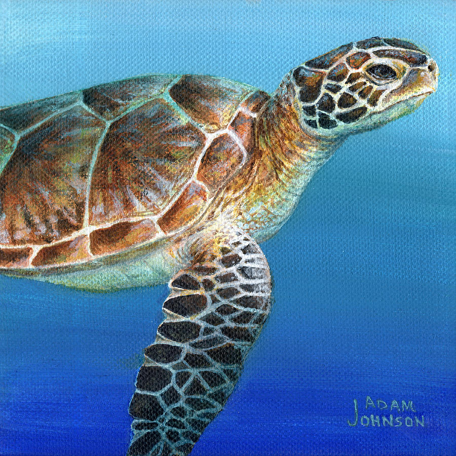 Sea Turtle 2 of 3 by Adam Johnson