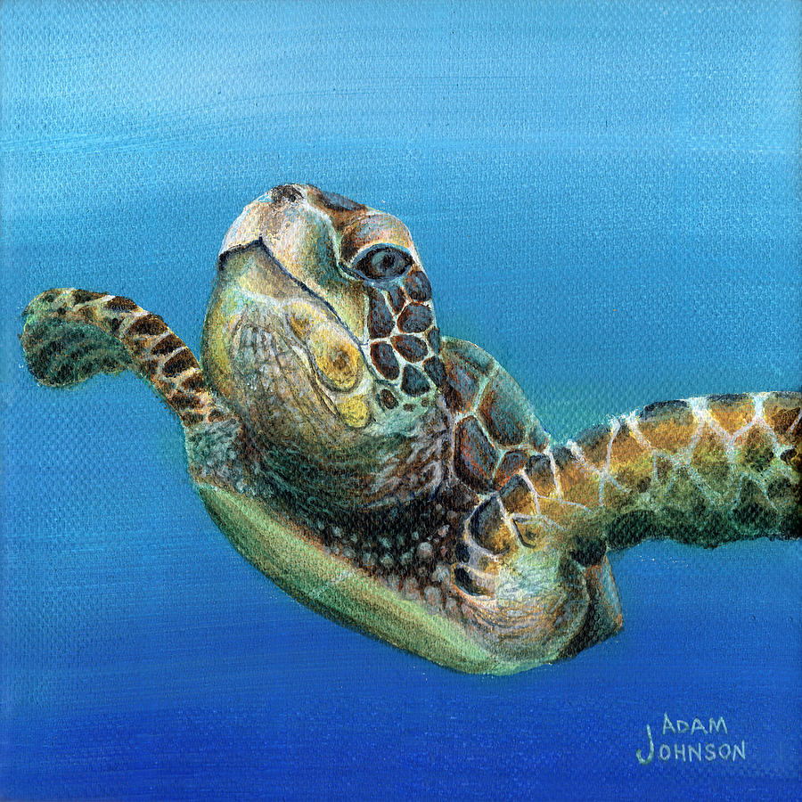 Sea Turtle 3 of 3 by Adam Johnson