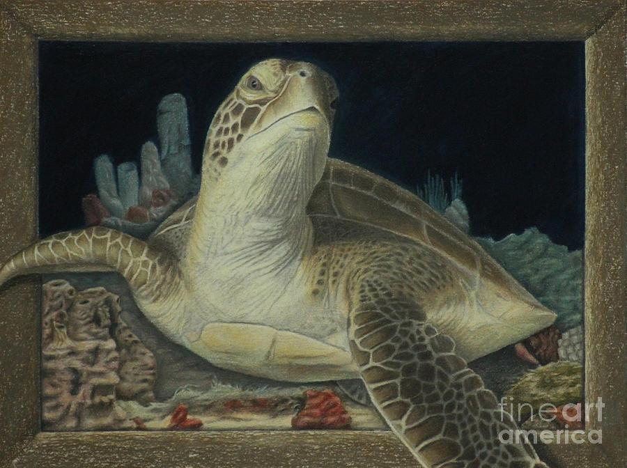 Colored Pencil Painting - Sea Turtle by Jennifer Watson