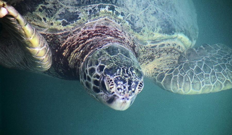 Sea Photograph - Sea Turtle by Mario Marsilio
