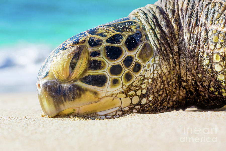 Sea Turtle resting at the Beach by Hans- Juergen Leschmann