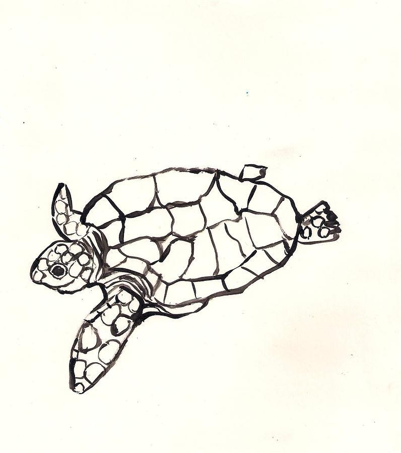 Sea Turtle Drawing By Samuel Zylstra
