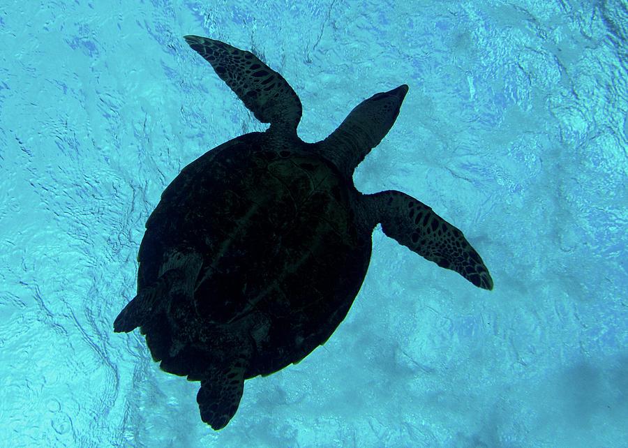 Sea Turtle Silhouette by Brenda Smith DVM