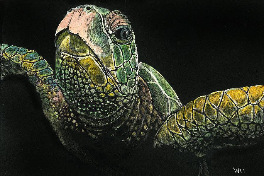 Sea Turtle by William Underwood
