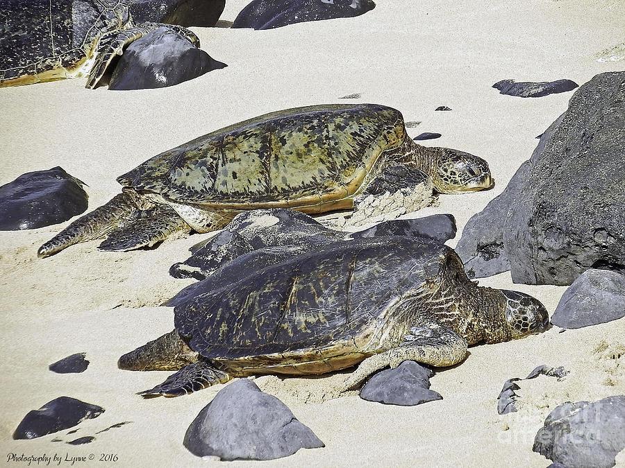 Sea Turtles Photograph