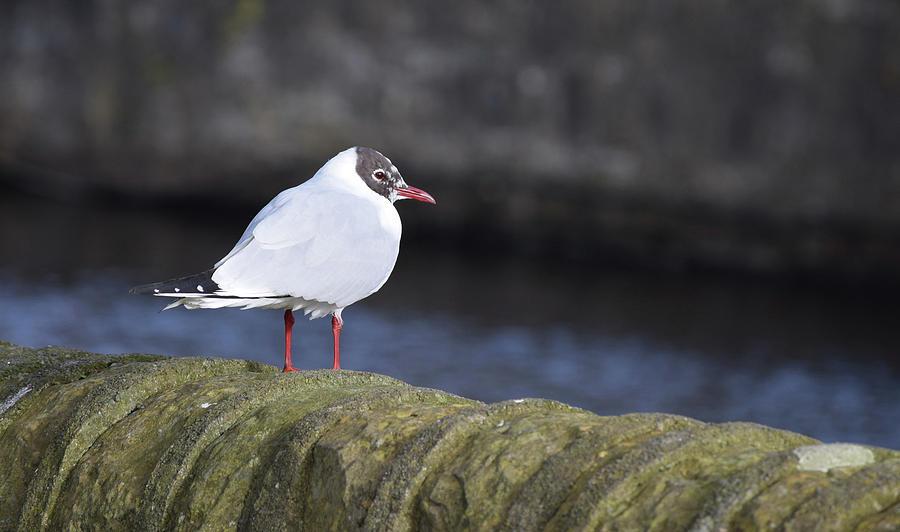 Seabird Photograph