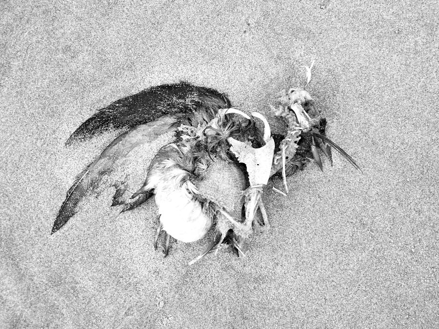 Seabird Fatalities-1 by Tarey Potter