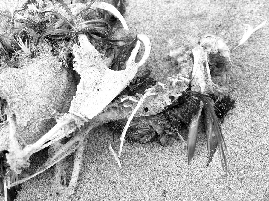 Seabird Fatalities-2 by Tarey Potter