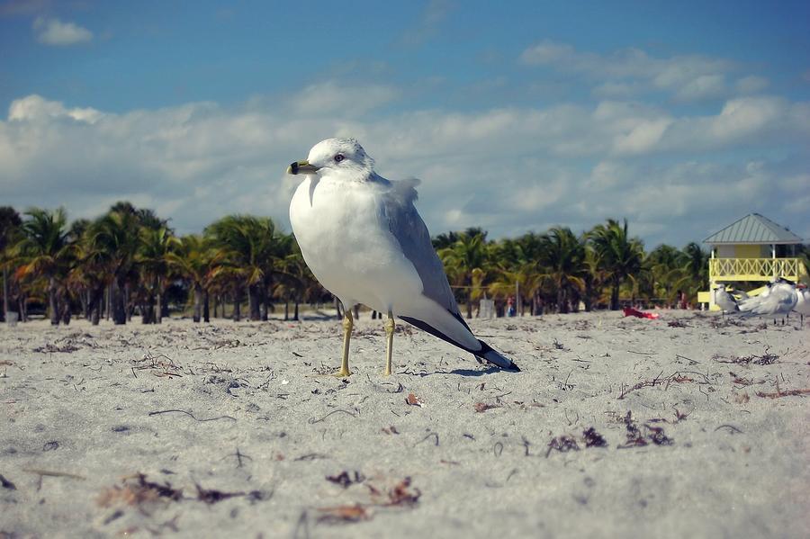 Bird Photograph - Seabird by JAMART Photography