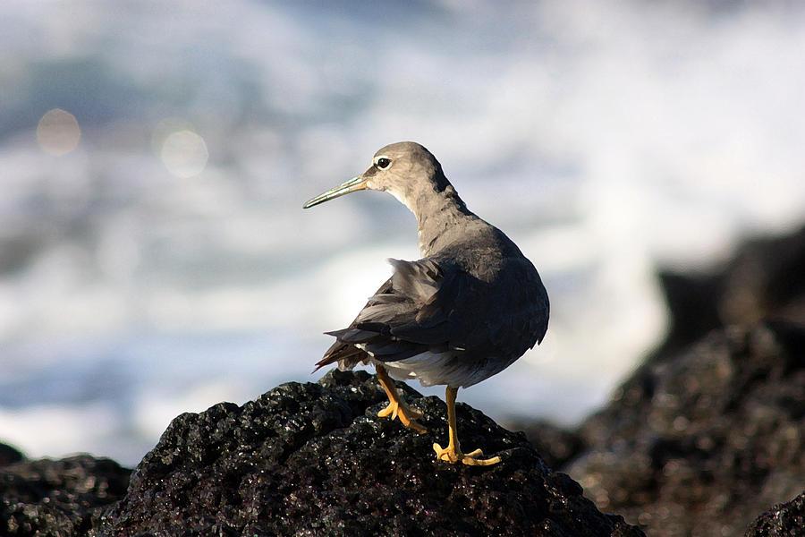 Bird Photograph - Seabird by Mary Haber