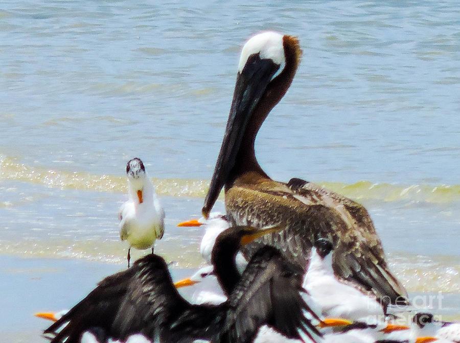 Shorebirds Photograph - Seafaring Trio by Marilee Noland