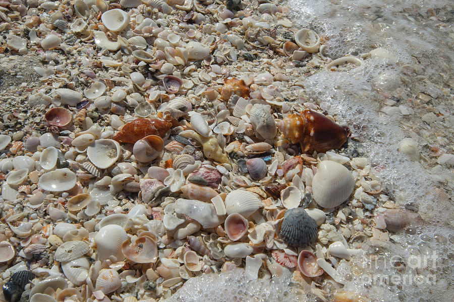 Seafoam And Shells Photograph