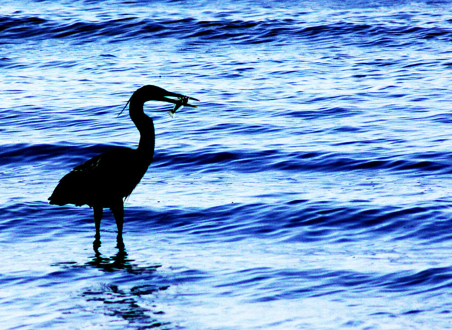 Heron Photograph - Seafood Deli by Barbara  White