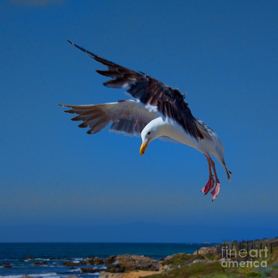 Seafood Landing Photograph by Patrick Witz