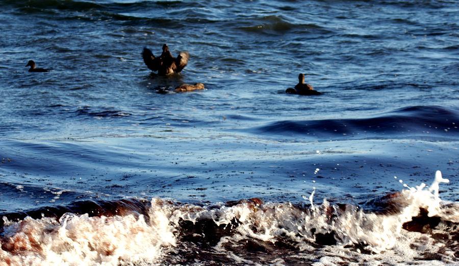 Seagul landing by Robert Morin
