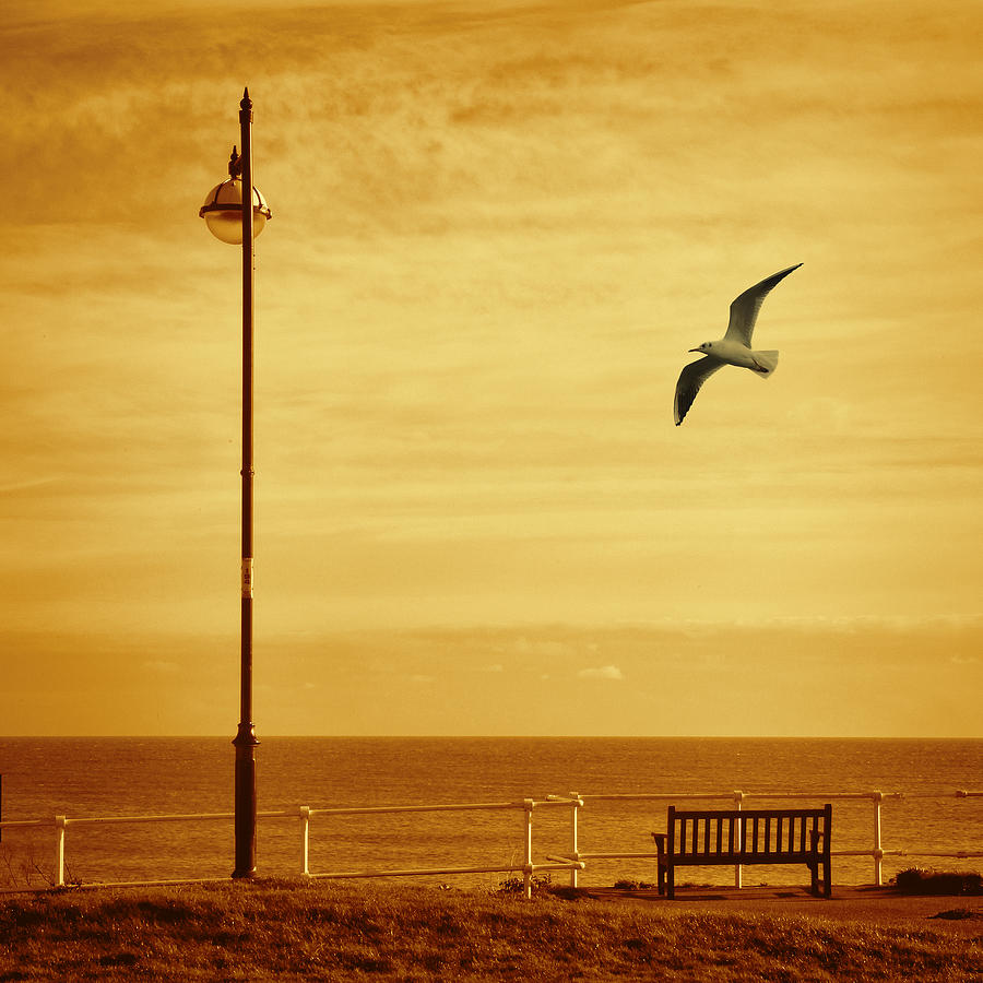 Seagull And Seat Digital Art by Martin Fry