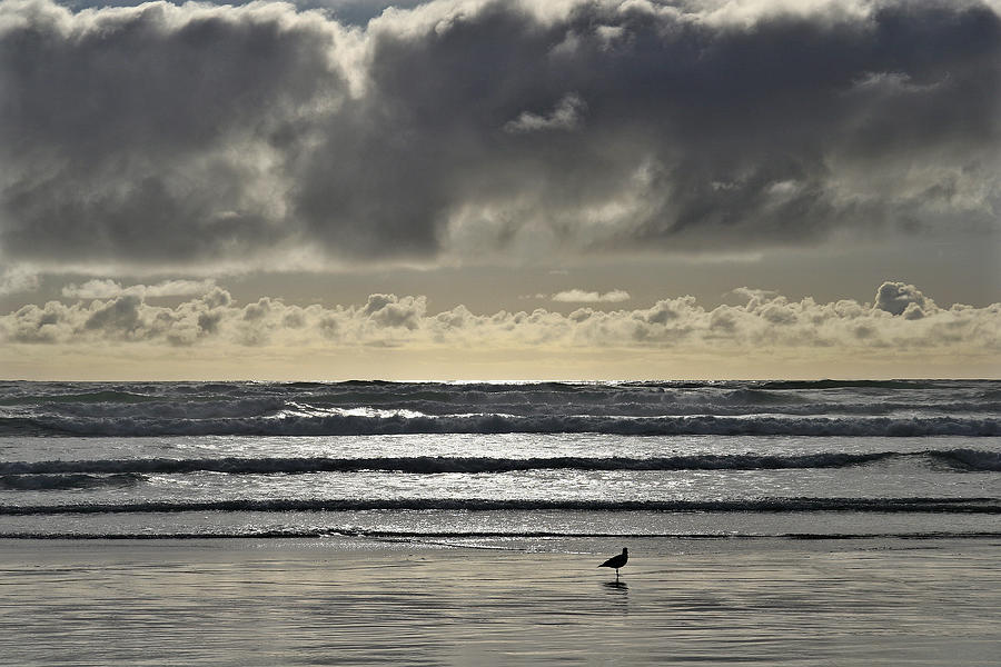 Cannon Photograph - Seagull At Cannon Beach by Wes and Dotty Weber