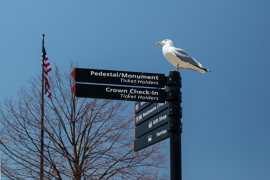 Seagull At Liberty Island Photograph