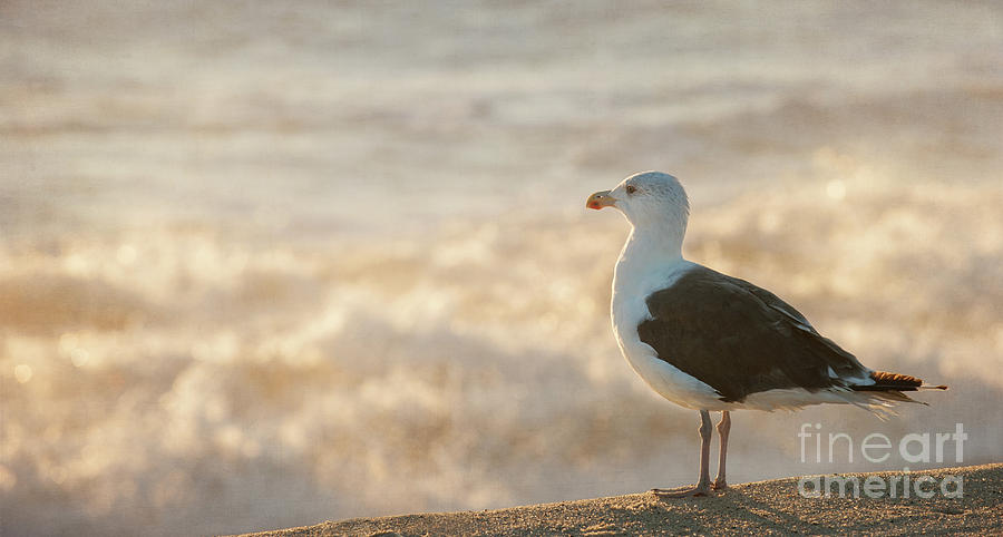 Seagull at Sunrise by Michael James