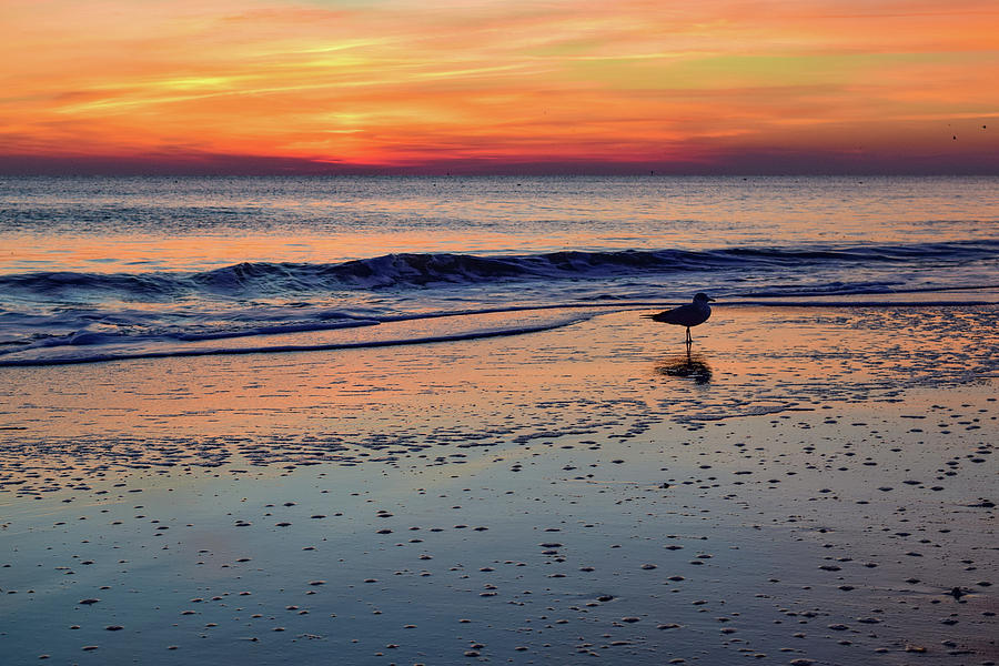 Seagull at Sunrise by Nicole Lloyd