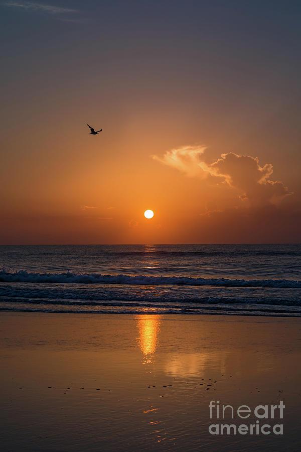 Sunrise Photograph - Seagull At Sunrise by Zina Stromberg