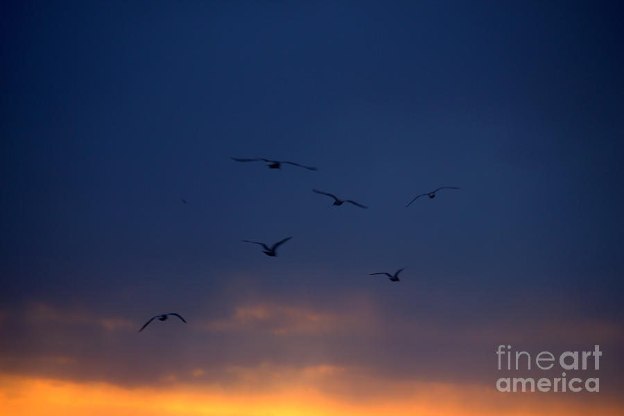 Grand Bend Photograph - Seagull Colors 4 by John Scatcherd