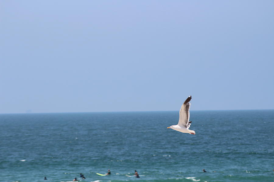 Seagull Photograph - Seagull Flying Over Huntington Beach by Colleen Cornelius