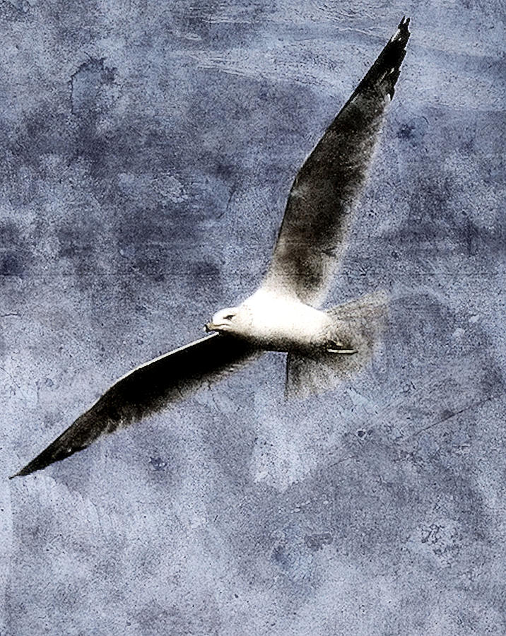 Seagull Photograph - Seagull by Gulf Island Photography and Images