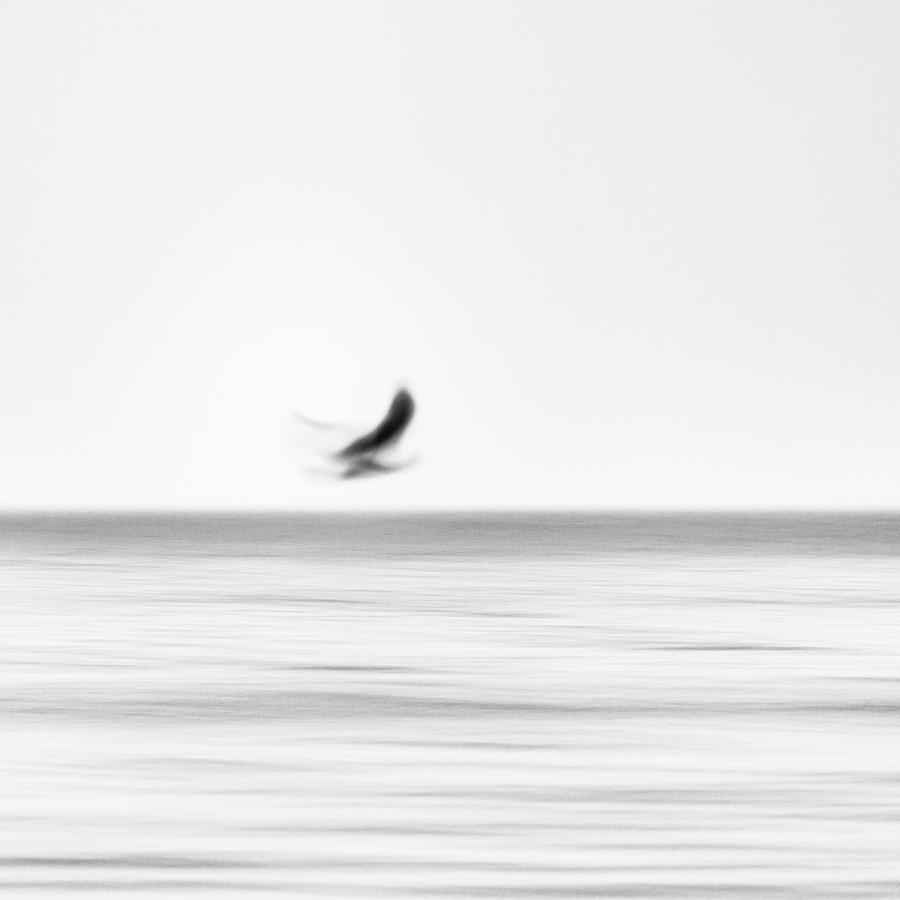 Seagull Photograph - Seagull by Holger Nimtz