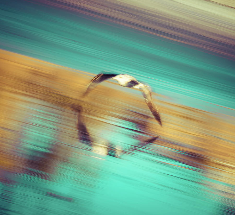 SeaGull In Motion by T Brian Jones