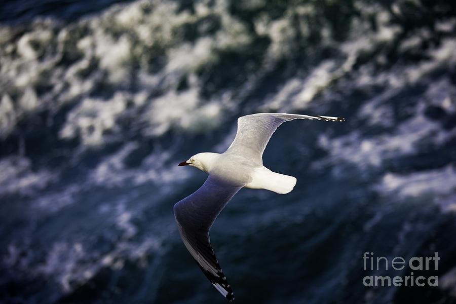 Seagull Photograph - Seagull In Wake by Sheila Smart Fine Art Photography