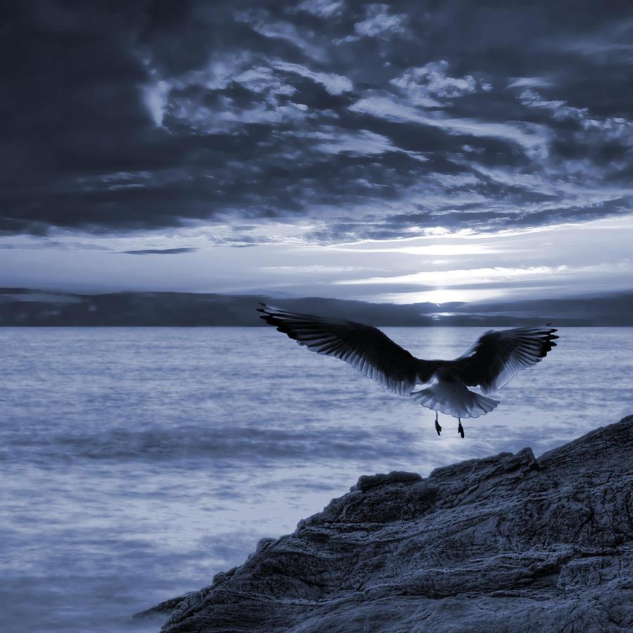 Atmospheric Photograph - Seagull by Jaroslaw Grudzinski