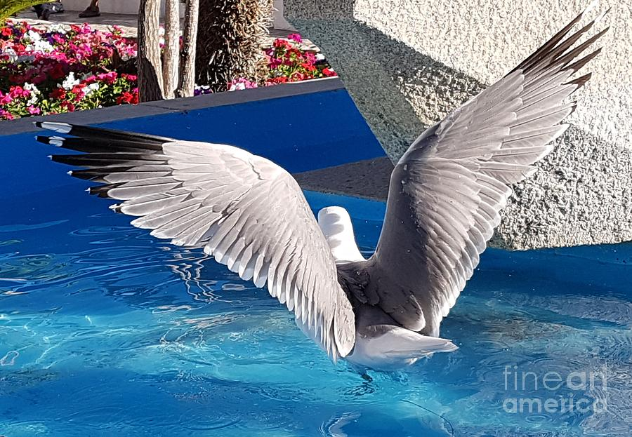 Seagull by Jeepee Aero