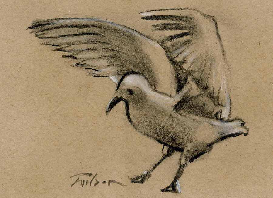 Charcoal Painting - Seagull Landing by Ron Wilson