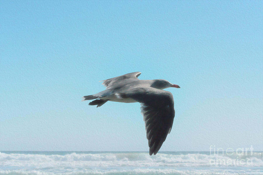 Seagull Digital Art - Seagull by Leah McPhail