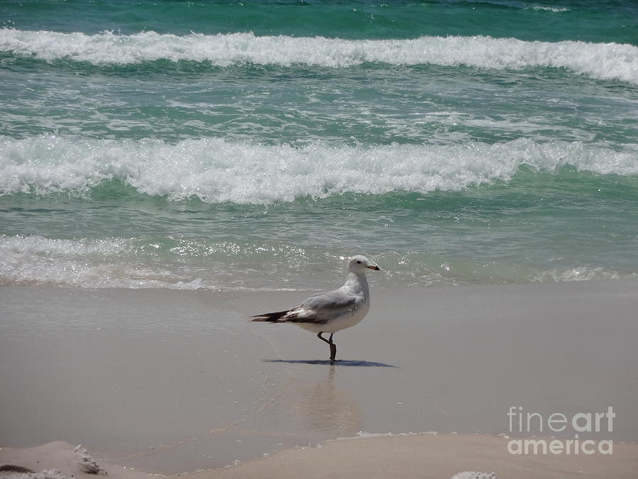 Seagull Photograph - Seagull by Megan Cohen