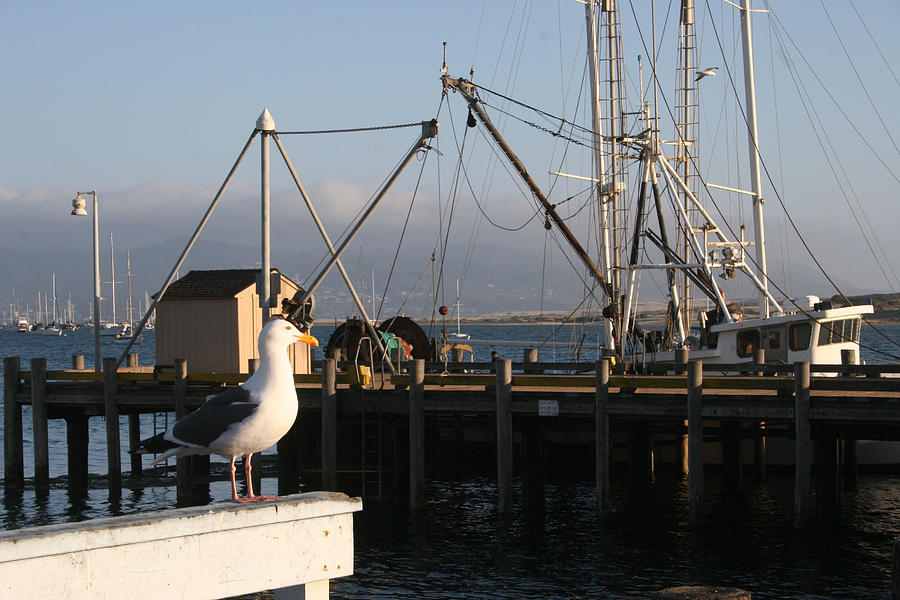 Boats Photograph - Seagull Morro Bay California by Bill Mollet