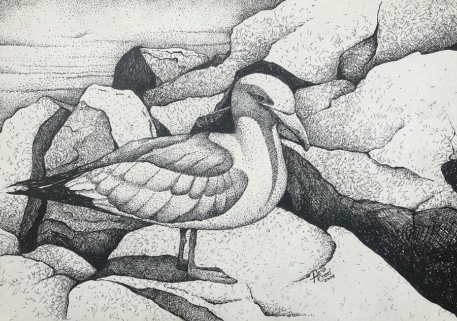 Seagulls Drawing - Seagull On Rocks by Heidi Creed