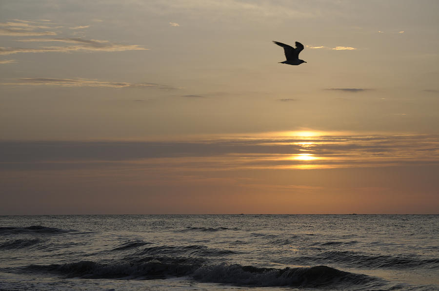 Seagull Photograph - Seagull Over Atlantic Ocean At Sunrise by Darrell Young