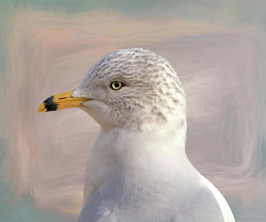 Ring-billed Gull Photograph - Seagull Portrait by Donna Kennedy