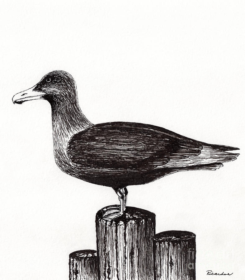 Seagull Drawing - Seagull Portrait On Pier Piling E3 by Ricardos Creations
