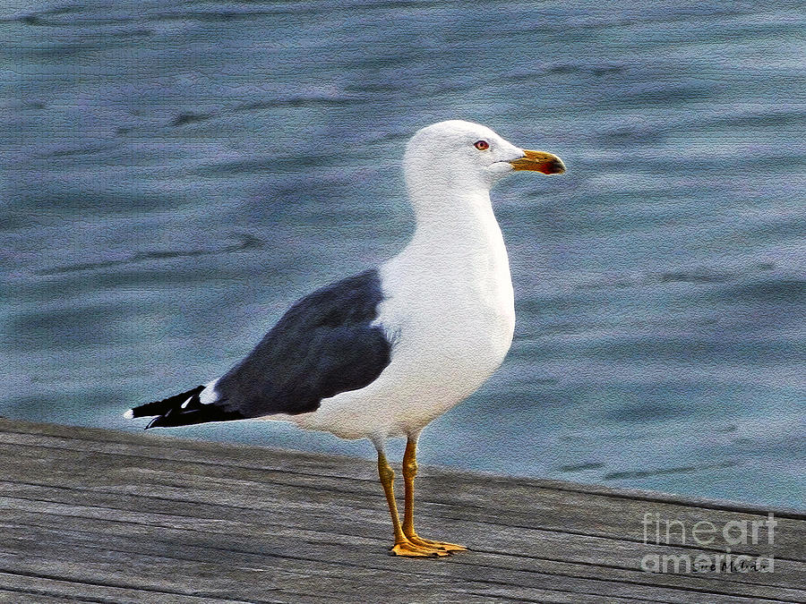 Seagull Photograph - Seagull Portrait by Sue Melvin