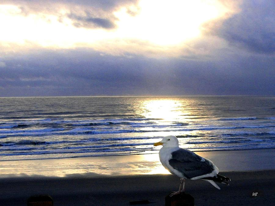 Seagull Photograph - Seagull Sentinel by Will Borden