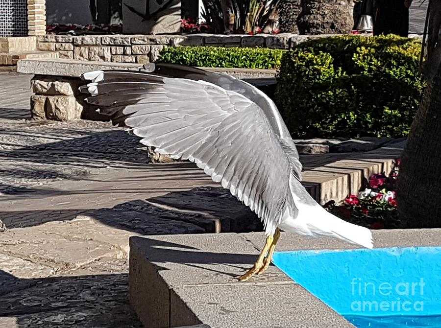 Seagull showing off by Jeepee Aero